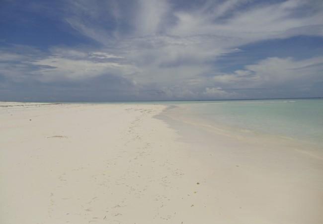 Tropical Beach Zanzibar