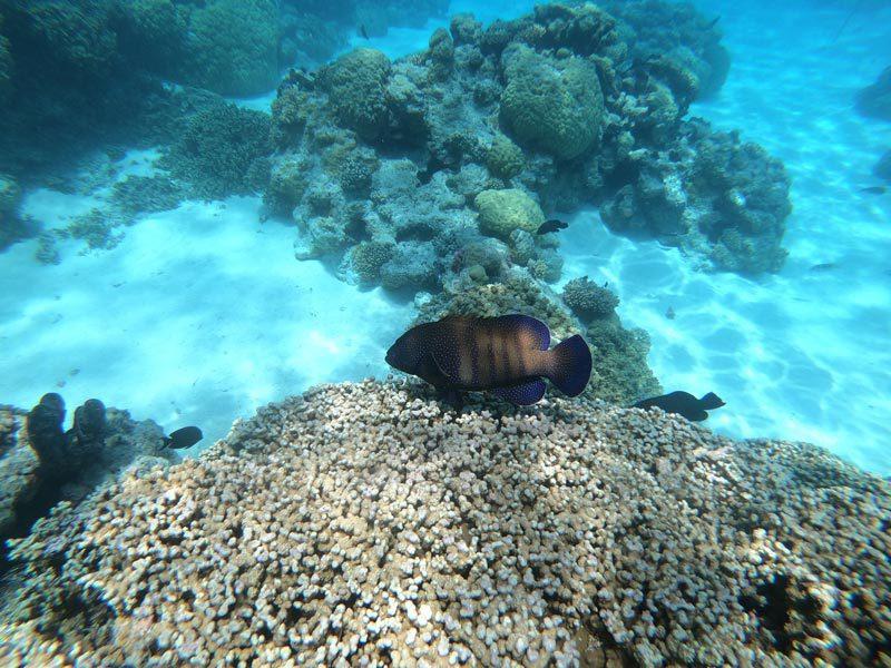 Aquarium Snorkeling tour - Rangiroa Atoll French Polynesia - reef fish