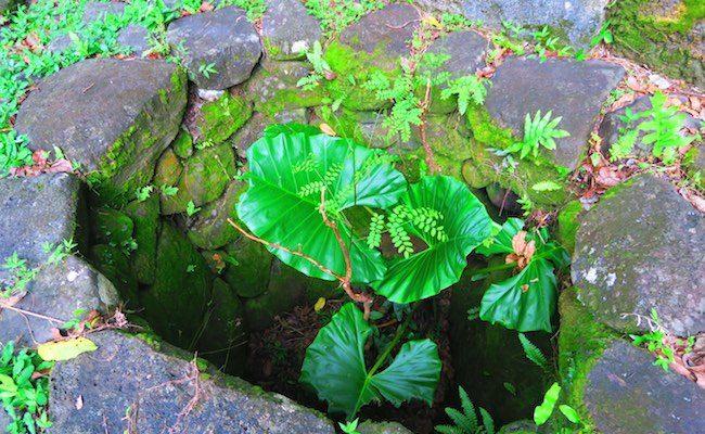 Archeological site food pit Nuku Hiva Marquesas Islands French Polynesia