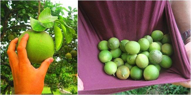 Atuona Village fruit Hiva Oa Marquesas Islands French Polynesia