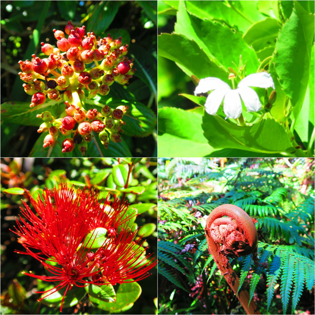 Tropical Plants in Pepeopae Forest Bog Trail - Molokai Hawaii
