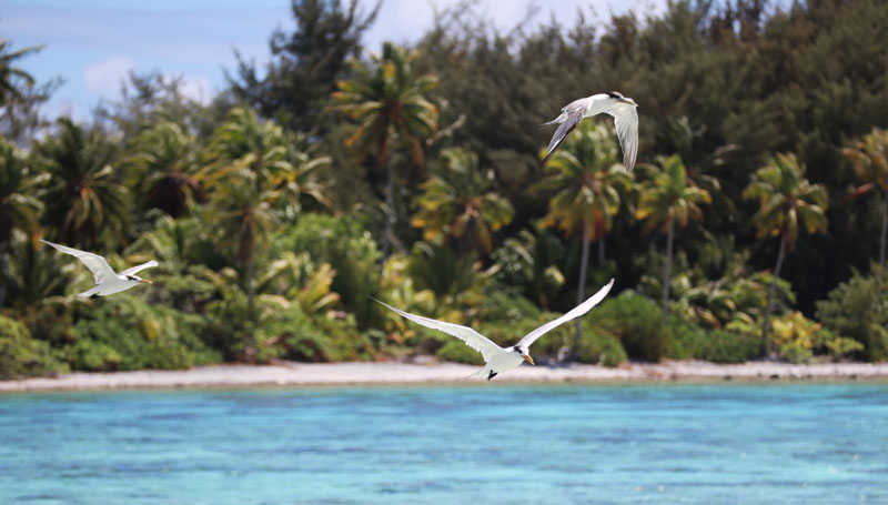 Bora Bora Lagoon tour French Polynesia frigate birds