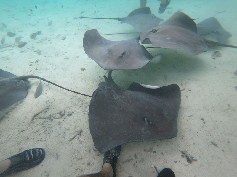 Bora Bora Lagoon tour French Polynesia stingrays 2