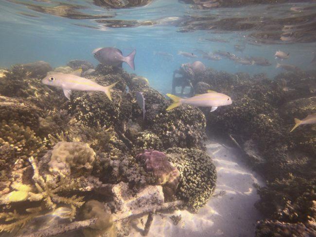 Bora Bora Pearl Beach Resort - snorkeling 2