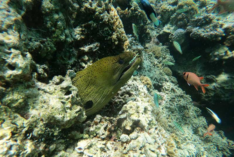 Bora Bora lagoon tour French Polynesia - morey eel