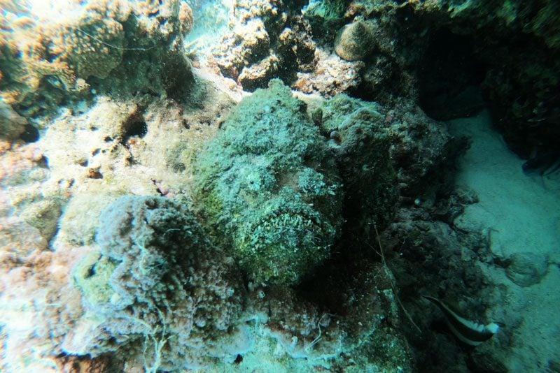Bora Bora lagoon tour French Polynesia - stone fish