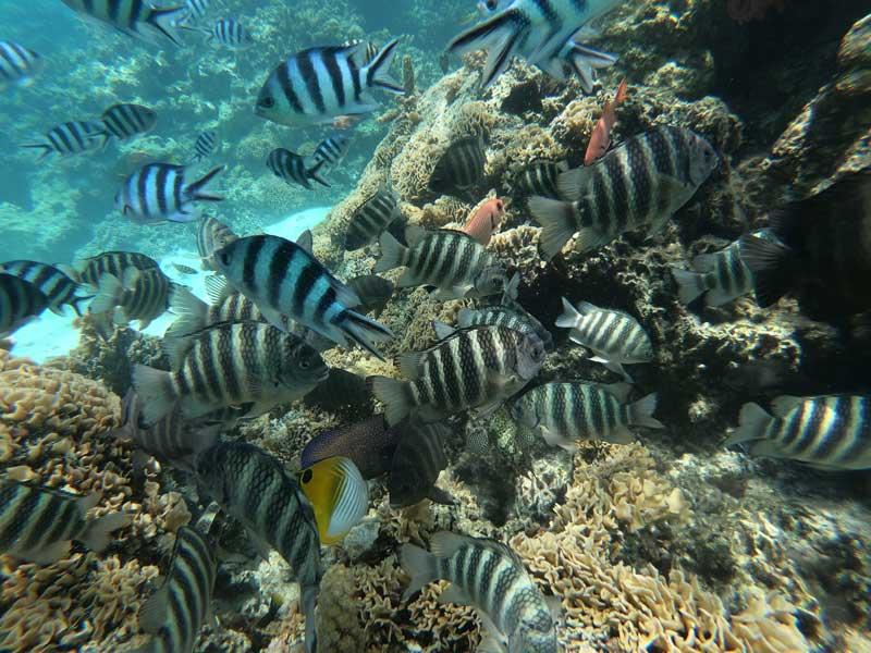 Bora Bora lagoon tour French Polynesia - tropical fish