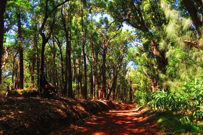 Cloud forest - Kamakou Preserve - Molokai Hawaii