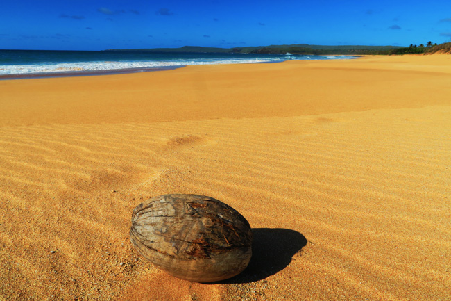 Coconut on beach - Papohaku Beach - Molokai Hawaii