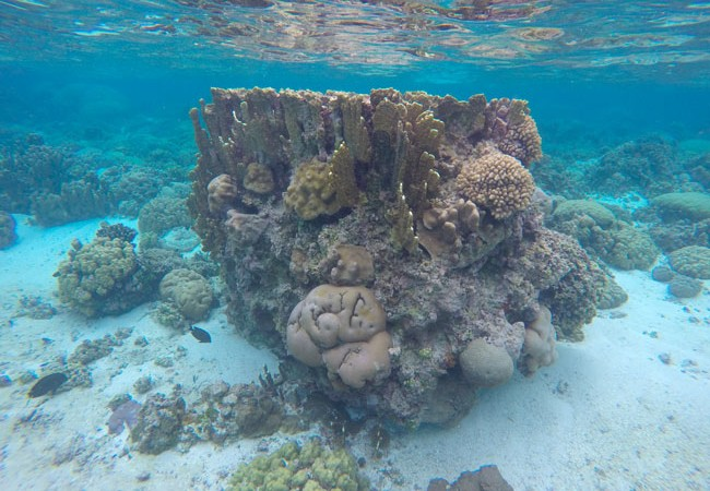Coral at Ofu Beach in American Samoa