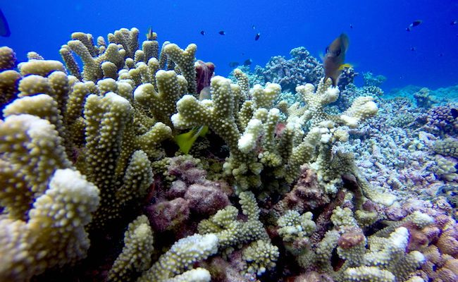 Diving Rangiroa French Polynesia Tiputa Pass coral