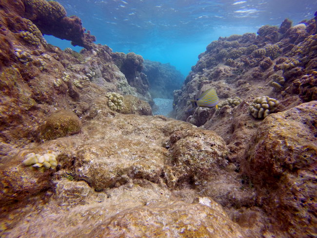 Diving Rangiroa French Polynesia Tiputa Pass drift diving