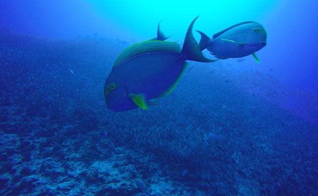 Diving Rangiroa French Polynesia Tiputa Pass school of fish