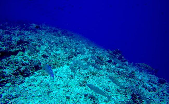 Diving Rangiroa French Polynesia Tiputa Pass spotted fish