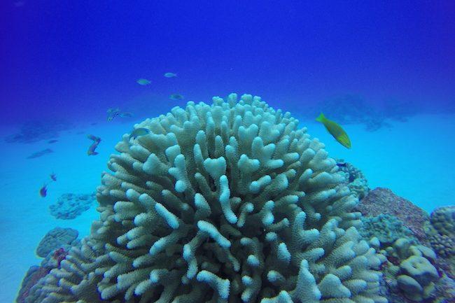 Diving-Rarotonga-cook-islands-coral-and-fish