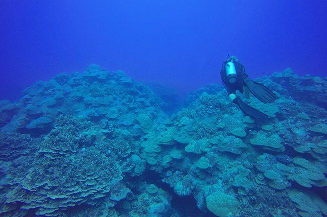 Diving-Rarotonga-cook-islands-coral-garden-2