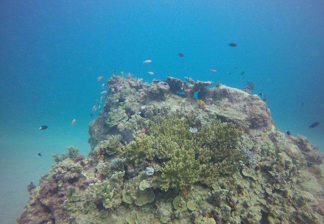 Diving Savaii Samoa 1