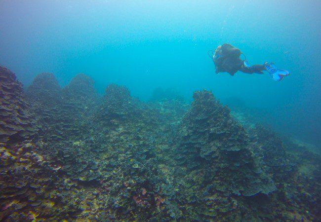 Diving Savaii Samoa lava mounts