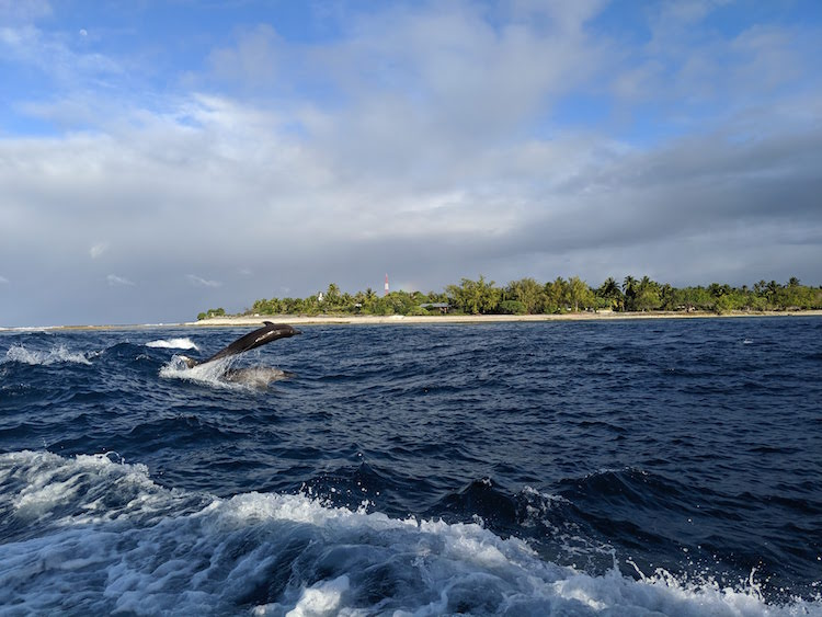 Dolphin jumping in lagoon pass Rangiroa French Polynesia