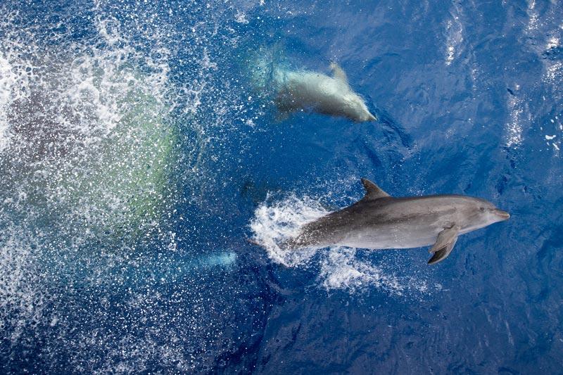 Dolphins in Tiputa Pass - Rangiroa Atoll French Polynesia