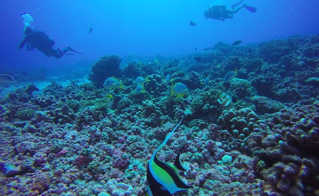 Drift-dive-fakarava-north-pass-divers