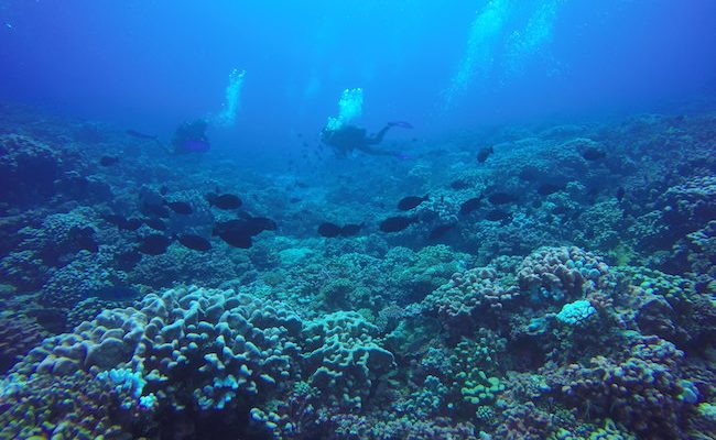 Drift-dive-fakarava-north-pass-fish