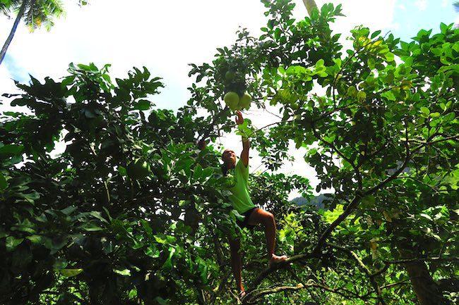Hakaui Valley Vaipo Waterfall hike getting grapefruit Nuku Hiva Marquesas Islands French Polynesia
