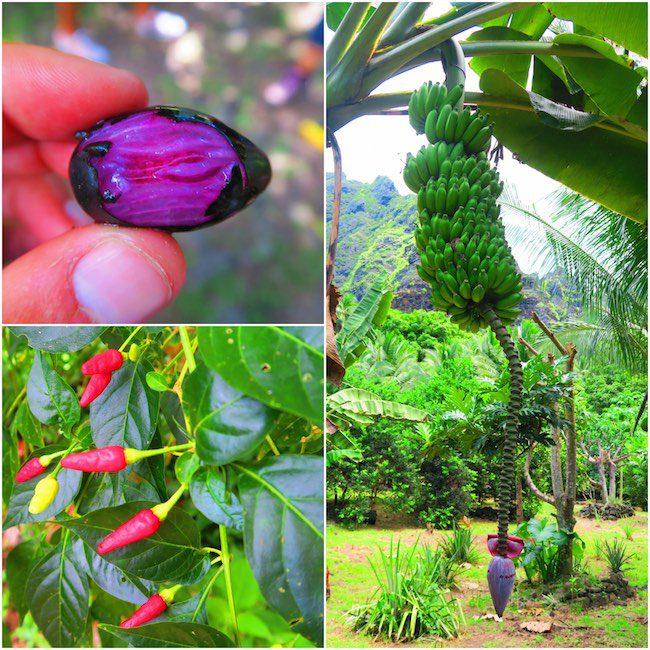 Hakaui Valley Vaipo Waterfall hike tropical fruit Nuku Hiva Marquesas Islands French Polynesia