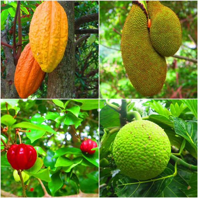 Halawa Valley Hike Molokai Hawaii - tropical fruits
