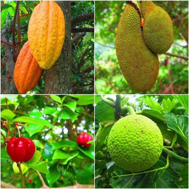 Halawa Valley Hike Molokai Hawaii - tropical fruits