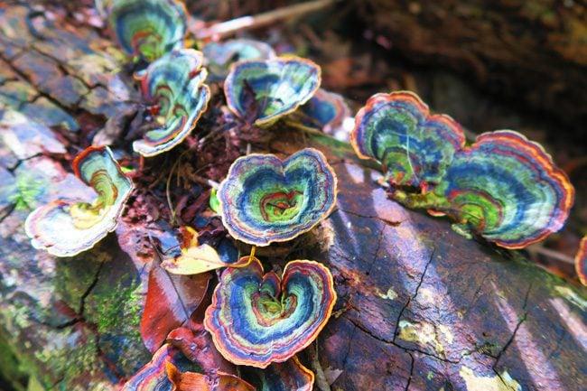 Halawa Valley Hike - mushrooms - Molokai Hawaii