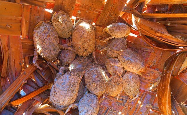 Hanatekuua Bay Hike Hiva Oa Marquesas Islands French Polynesia crabs