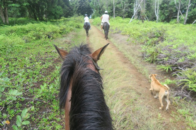 Horseback riding Hiva Oa Marquesas Islands French Polynesia in forest