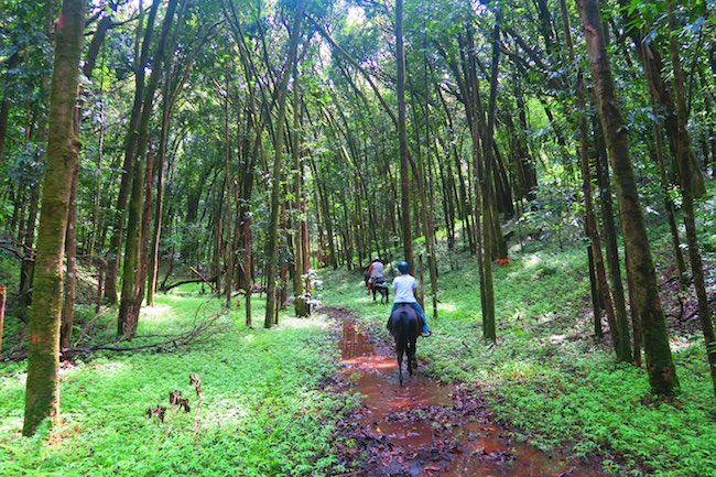 Horseback riding Hiva Oa Marquesas Islands French Polynesia rainforest