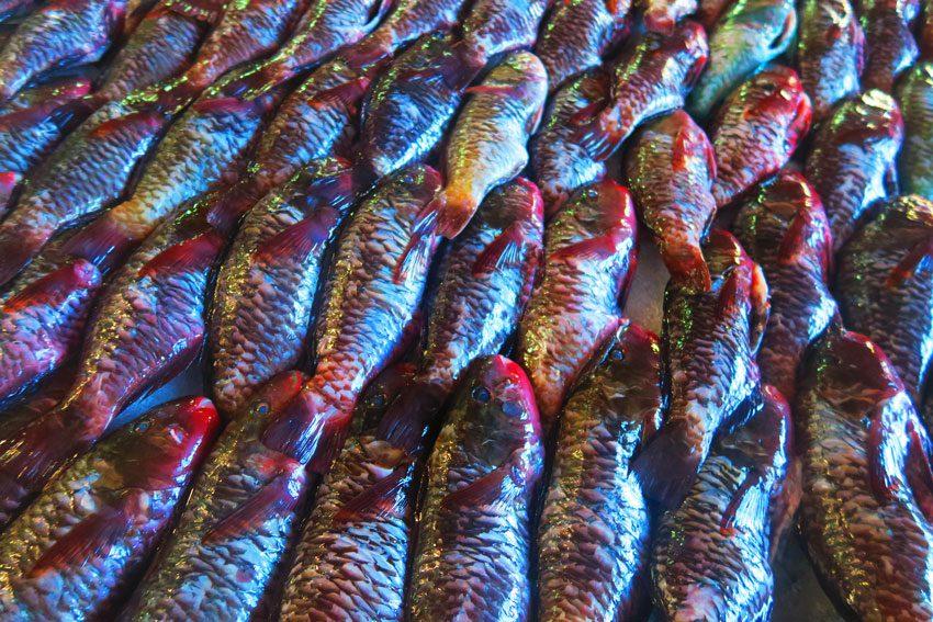 Lagoon fish - Papeete Market - Tahiti - French Polynesia
