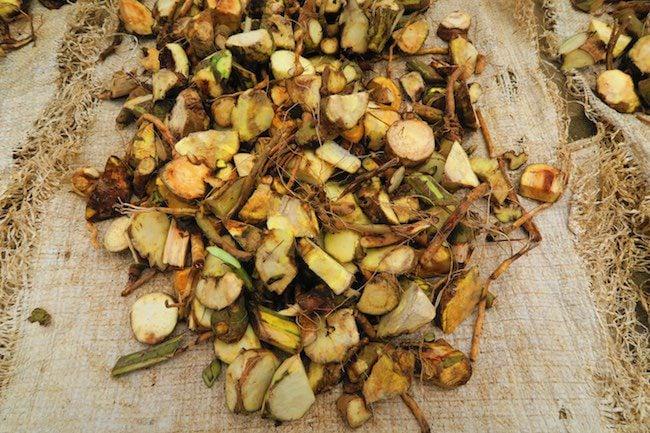 Making Kava Drink In Vanuatu - Plant Roots