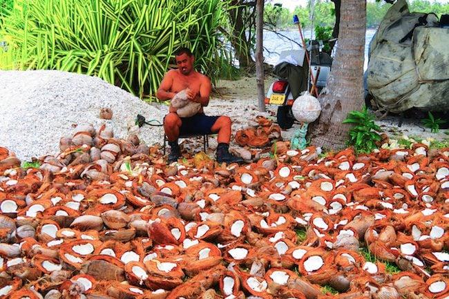 Making copra Tiputa Village Rangiroa French Polynesia