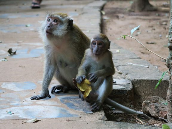 monkeys-in-railay-beach-thailand-4