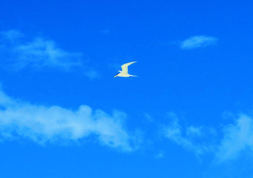Motu Auira - Maupiti - French Polynesia - Bird
