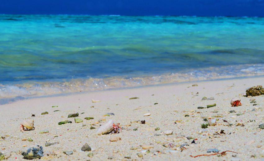 Motu Auira - Maupiti - French Polynesia - Hermit Crabs