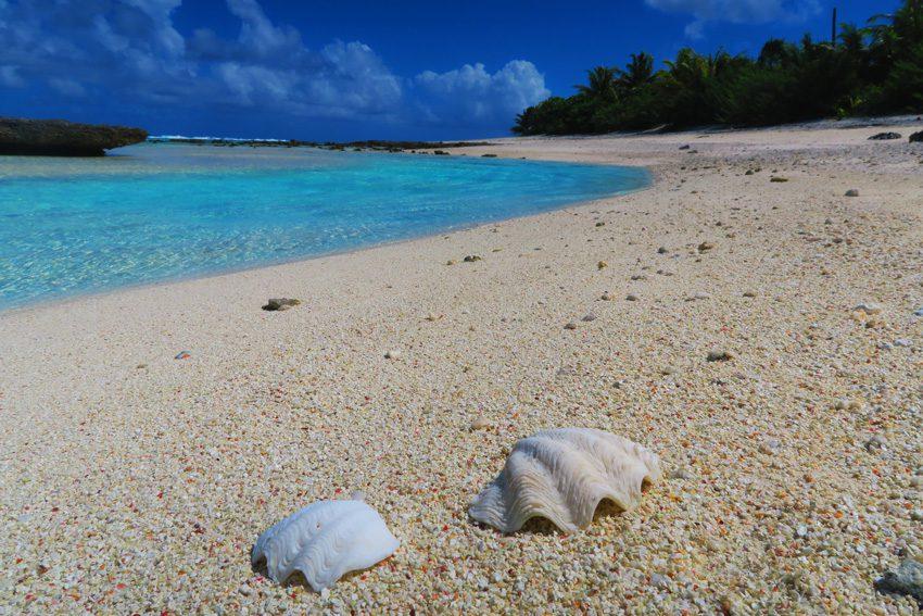 Motu Auira - Maupiti - French Polynesia - Shells