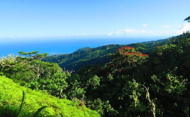 Mount Aorai Hike Tahiti French Polynesia - view from start