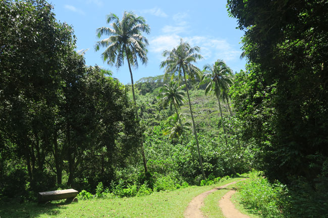 Mount Tapioi hike Raiatea Island French Polynesia walking through rainforest