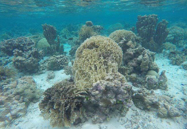 Ofu Beach reef in American Samoa