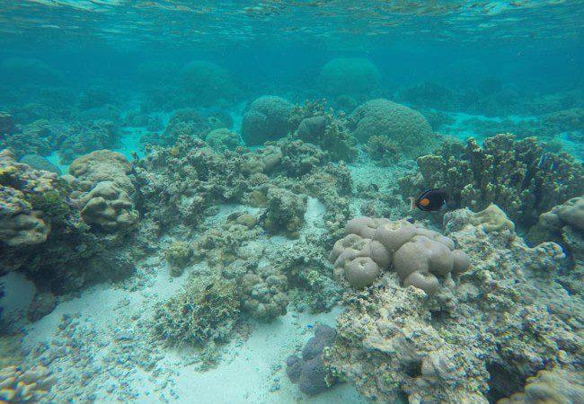 Ofu Reef American Samoa