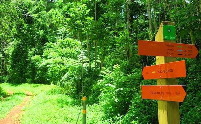 Opunohu Valley Hike Moorea French Polynesia