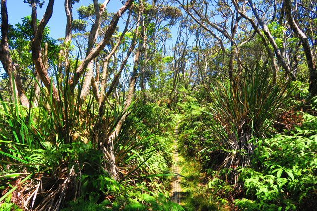 Pepeopae bog hike - Kamakou Preserve - Molokai Hawaii 2