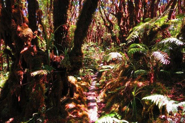 Pepeopae bog hike - Kamakou Preserve - Molokai Hawaii 3