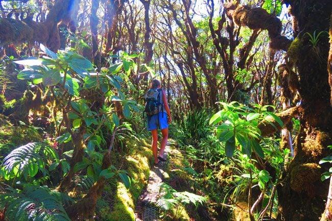 Pepeopae bog hike - Kamakou Preserve - Molokai Hawaii