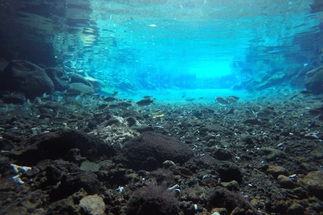 Piula-Cave-Pool-Samoa-clear-water